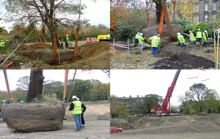 Relocation of Mature Tree